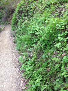 Look for turrets on banks cut into the uphill side of shady, woodland trails.